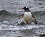 Antarctica Holiday 2010