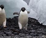 antarctica_20101223_img_6925