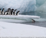antarctica_20101223_img_7100