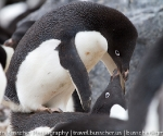 antarctica_20101223_img_7180
