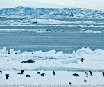 antarctica_20101223_img_7395