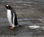 antarctica_20101221_img_1201