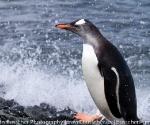 antarctica_20101221_img_4249