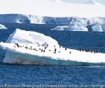 antarctica_20101222_img_4738