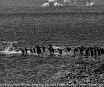 antarctica_20101222_img_5103