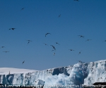 antarctica_20101222_img_5195