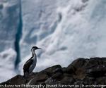 antarctica_20101222_img_5443