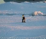 antarctica_20101222_img_6037
