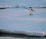 antarctica_20101222_img_6071