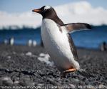 antarctica_20101222_img_7413