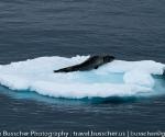 Antarctica 2010