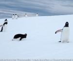 antarctica_20101225_img_1706