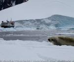 antarctica_20101225_img_9498