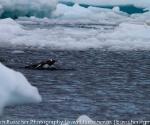 antarctica_20101225_img_9660