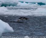 antarctica_20101225_img_9661