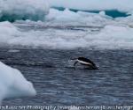 antarctica_20101225_img_9662