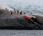 antarctica_20101225_img_9824