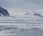 antarctica_20101225_img_9838