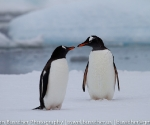 antarctica_20101225_img_9855
