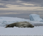 antarctica_20101225_img_9881
