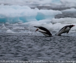 antarctica_20101225_img_9944