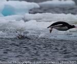 antarctica_20101225_img_9945