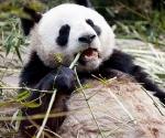 panda_base-20110206-img_3483