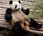 panda_base-20110206-img_3491