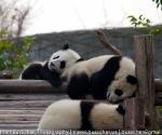 panda_base-20110206-img_3609