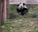 panda_base-20110206-img_3647