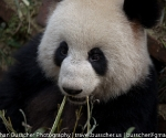 panda_base-20110206-img_3655