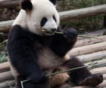 panda_base-20110206-img_3685