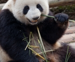 panda_base-20110206-img_3698