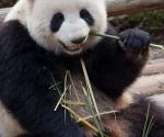 panda_base-20110206-img_3698