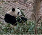 panda_base-20110206-img_3710