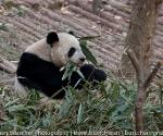 panda_base-20110206-img_3710