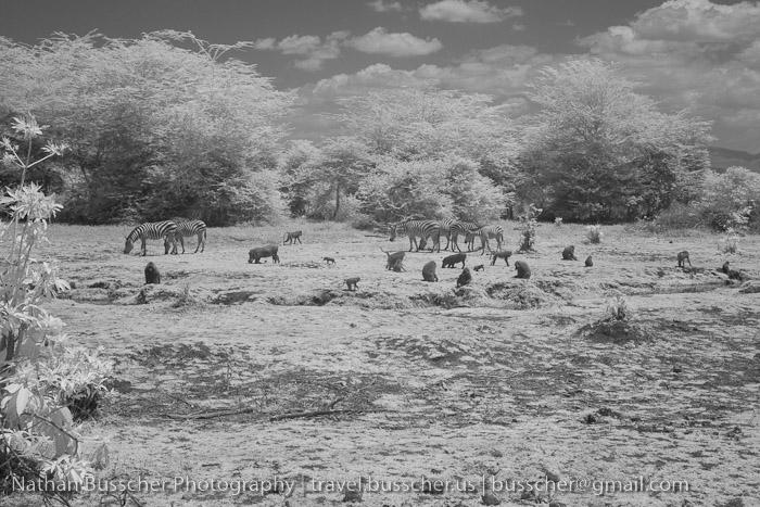 Tarangire infrared scene